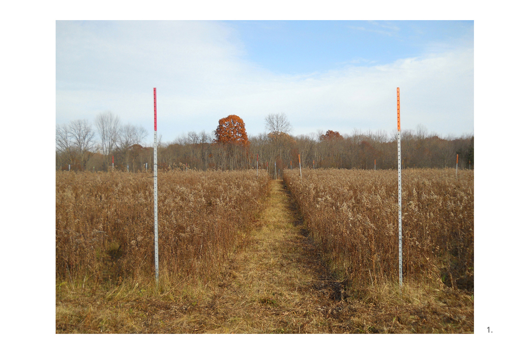 Vassar Farm Orange Poles