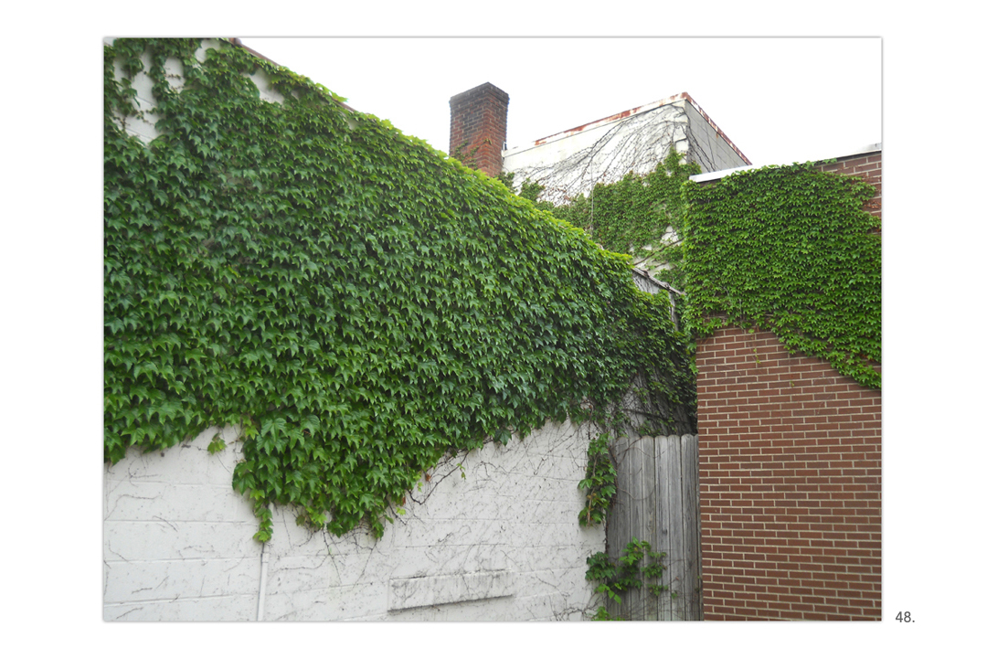 Ivy On White & Brick Walls